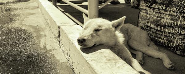 ヴァータの季節の安眠法